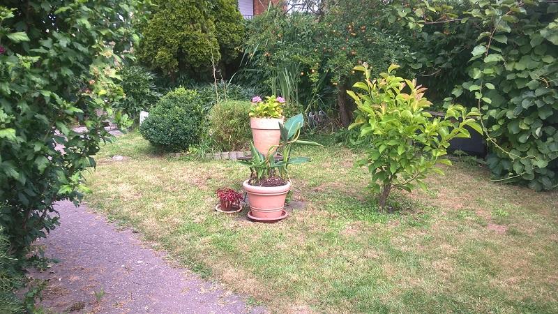 Garten Foto 1